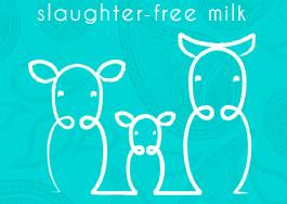 Ahimsa Slaughter-Free milk now on sale thumbnail